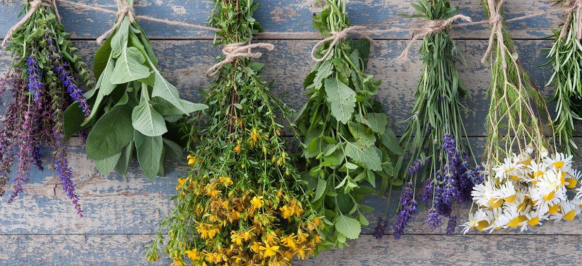 Beredningar av läkeväxter