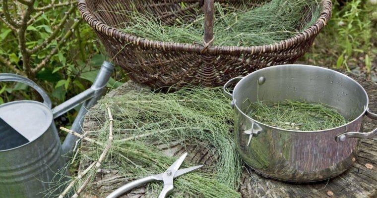 Jag bjuder mina växter på tea time med åkerfräken